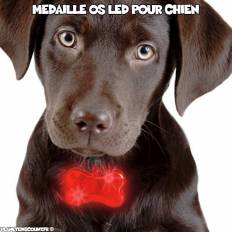 Médaille os lumineuse LED pour chiens