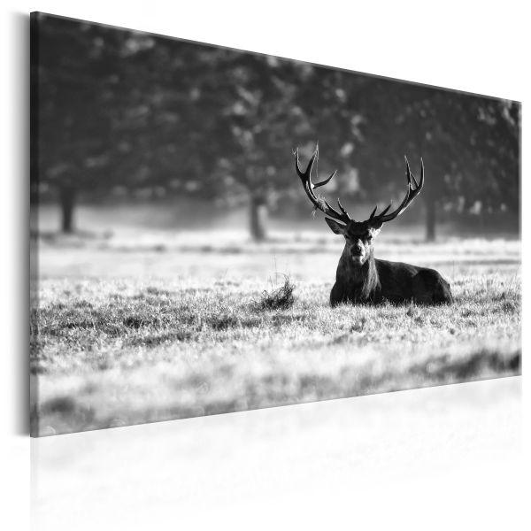Tableau Lying Deer