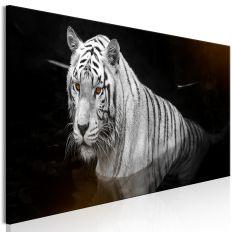 Tableau Shining Tiger 1 Pièce Orange Narrow